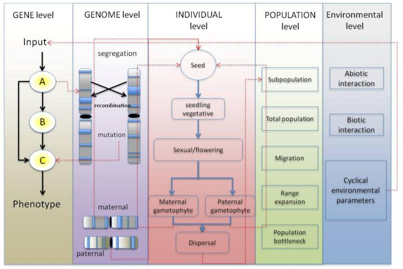 The different layers of regulation in Agrisims: gene network, genome, individual, population and environment